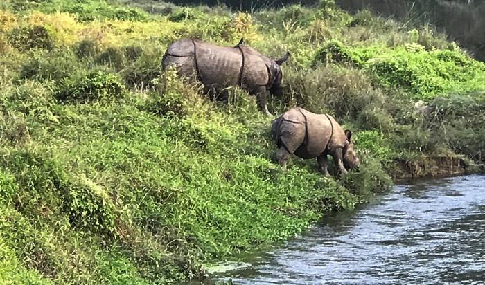 One horned Rhinoceros at Chitwan National Park