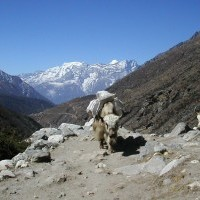 Jiri to Everest Base Camp