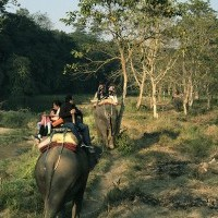 Jungle Safari with Elephant at Chitwan National Park